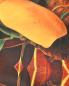 Платок из шелка с узором Innangelo  –  Деталь1